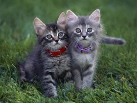 cat03rk048638.jpg