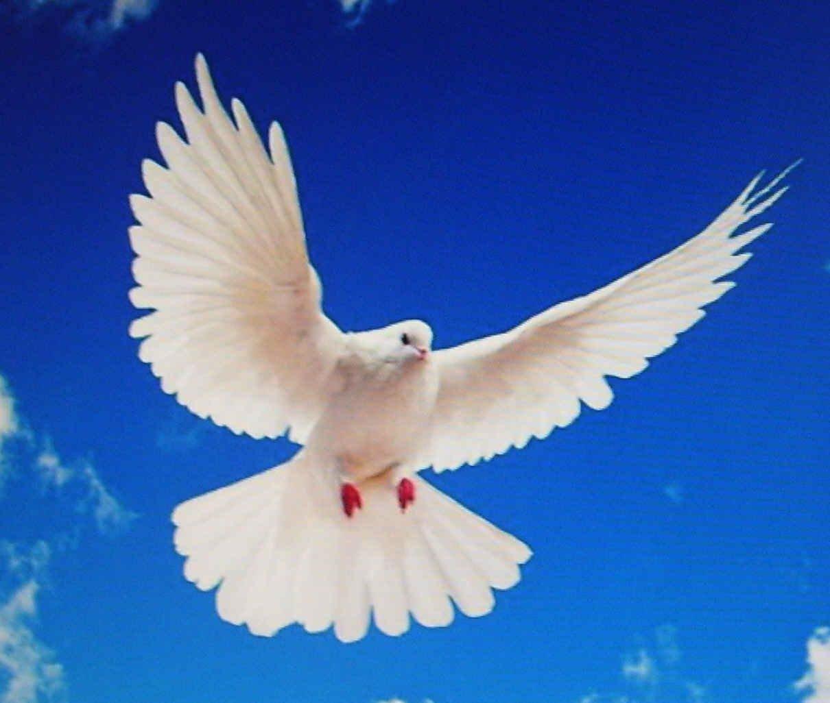 Populaire ma passion le crochet » Jolies colombes de la paix TD07