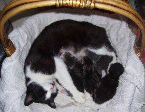 Qui veux des petits chatons ? RIDEAUX-SALLE-012-300x231