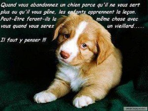 Pensons a nos animaux familiers 550570_368145173253269_390347914_n-300x225
